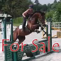 cat-horses-for-sale
